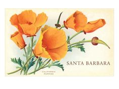 California Poppy, Santa Barbara, California Premium Poster