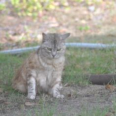 Luna, kinda confused    #luna #cat #cats #pet #petstagram #nature #kitten #kittens #catstagram #cutie #pets #kitty #catlovers #catsofinstagram #animal #sweet #funpetlove #catlover #ilovemycat #ilovemypet #instapets #petsagram #picpets #instacat #love #music #faces #coffee