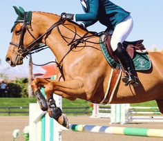 eqcaptures: flying high @ thermal ca - I can always tell which is the front end of a horse, but beyond
