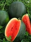 blacktail mountain watermelon one of Fine Gardenings 10 Foolproof Veggies