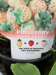 pineberries the mixture of pineapple and strawberry.