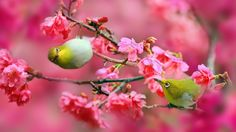 japanese white eye wallpapers  free download high definition