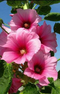 Landscaping hot pink flowers pink flower art pink flower painting p Pink Flower Centerpieces, Pink Flower Bouquet, Hot Pink Flowers, Hibiscus Flowers, Pretty Flowers, Dark Flowers, Blush Flowers, Gift Flowers, Flower Diy