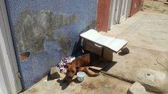 Hall of Petrolina Mayor Julio Lossio. We need a public veterinary hospital.