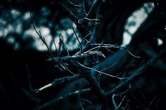 Branch - murphyz