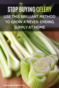 Stop Buying Celery. Use This Brilliant Method to Grow a Never-Ending Supply at Home It's relatively fast and simple to grow your own celery at home. Hydroponic Gardening, Hydroponics, Gardening Tips, Indoor Gardening, Raised Vegetable Gardens, Home Vegetable Garden, Celery Plant, Alcohol Drink Recipes, Fall Planters