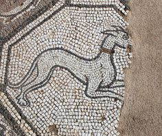 Grey hound, detail. Early Christian mosaic, Delphi Archeological Museum, Greece. Photo: Helen Miles Mosaics