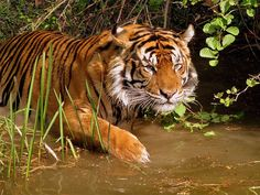 Anamudi Shola National Park - in Kerala, India