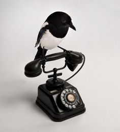 But now taxidermy has become highly fashionable & the work of artists such as Polly Morgan, highly collectable.  Taxidermy fits perfectly with the current trend for the unusual & theatrical, the old curiosity shop & an atmosphere of gothic glamour. Magpies feature as a design motif as illustrated by Polly Morgan's 'Someone on the Phone' & 'Dead Ringers'.
