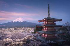Sakura garden under Chureito pagoda with a perfect view towards Mt Fuji.