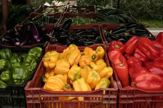Our Thursday food and sustainability tip is about Farmer's Markets - and why they have benefits beyond food. #eco #food