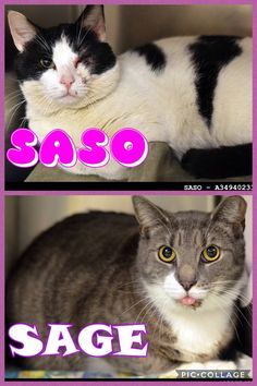 SASO & SAGE are ready to escape shelter to great homes! Each must exit ACCT Philly by 8pm FRIDAY 4/7. Mail lifesaving@acctphilly.org to save