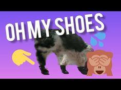 Lex Lex Lex Shoes mo ay nakaka... - YouTube 5 Months, Shih Tzu, Pets, Youtube, Shoes, Zapatos, Shoes Outlet, Shoe, Footwear