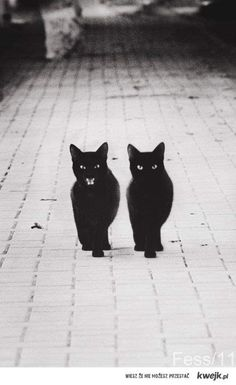okay i know its bad when one black cat CROSSES your path what happens if two are headed straight for you!!!