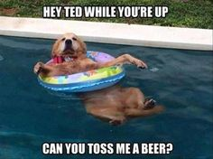 21 Funny Animal Pics for Your Tuesday