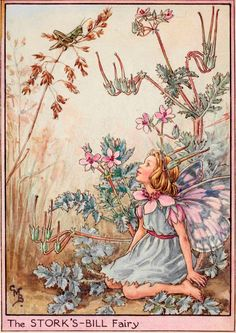 The Stork's-bill Fairy - Flower Fairies of the Wayside