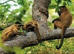 NONATO NOTÍCIAS: Salvador confirma morte de macacos por febre amare...