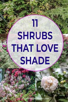 Find out which bushes to plant under trees in the shade garden in your backyard or front yard. These shrubs will help to brighten up your yard. #fromhousetohome #bushes #shade #gardeningtips #gardening #gardenideas Shade Loving Shrubs, Shade Shrubs, Shade Garden Plants, Garden Trees, Garden Bed, Shade Perennials, Fruit Garden, House Plants, Flowering Shade Plants