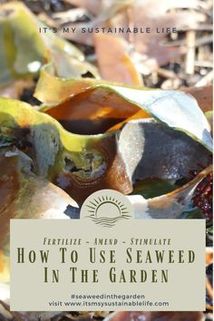 Using seaweed in the garden, a product of Mother Nature's aquatic garden, may be the best soil and plant amendment you can offer any garden. | It's My Sustainable Life @itsmysustainablelife #usingseaweedinthegarden #seaweed #seaweedbenefits #compostingseaweed #seaweedgardenbenefits #kelpinthegarden #kelpforthegarden #itsmysustainablelife Benefits Of Gardening, Organic Gardening, Gardening Tips, Amazing Gardens, Beautiful Gardens, Subsistence Agriculture, Water Wise, Backyard Farming, Organic Matter