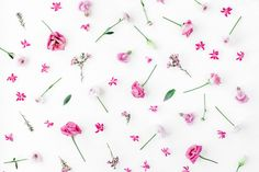 Image result for Pink flowers frame. Flat lay