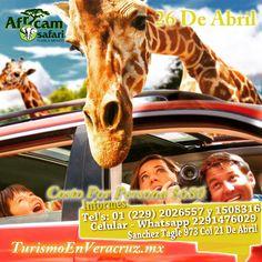 #Exucrsion a #AfricamSafari este 26 de abril http://www.turismoenveracruz.mx/category/africam-safari-2/