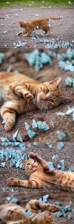 Cat playing with butterflies!