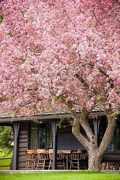 love this tree
