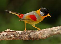 Beautiful Birds Pictures  fun-pak.blogspot.com