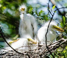 Nest full