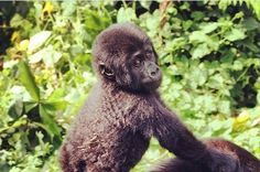 5 Instagram photos from our efforts for animals around the world