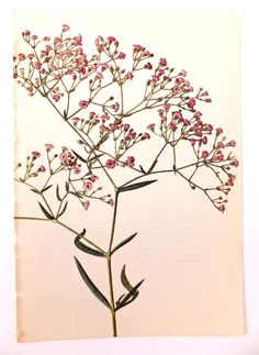 Gypsophila Vintage Flower Picture. by PeonyandThistlePaper on Etsy, £4.00