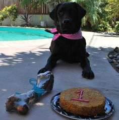 Dog Birthday Cake- I am going to make this for my Henry!