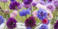Tips on how to grow wildflowers in container pots, for small spaces and urban gardens.