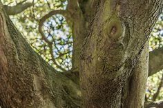 St. Anne's Park - [ http://photography.osx128.com/st-annes-park-15/ ] #ParksAndGardens