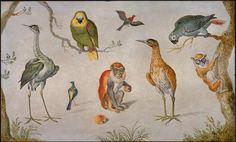 Study of Birds and Monkeys - Image