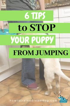 Puppies learn at an early age that when they jump, they are loved. Then your puppy learns that you it. Here are tips to stop your puppy from jumping. Dog Training Methods, Puppy Training Tips, Training Your Dog, Alpha Dog, Easiest Dogs To Train, Poor Dog, Big Dogs, Puppies, Goldendoodle Training