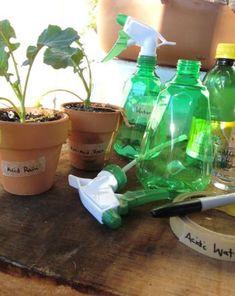 Science Fair: Effects of Acid Rain on Plant Growth