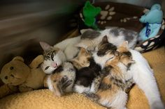 Kittens Rescued From Industrial Warehouse Reunited With Mother