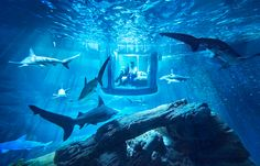 airbnb offers underwater shark suite with 360° glass walls