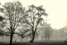 Park landscape engulfed in fog