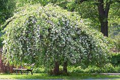 Brushes, Plants, Trees, Beautiful, Tree Structure, Blush, Plant, Paint Brushes, Wood