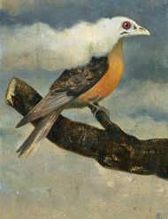 Saving Our Birds: Has the passenger pigeon taught us anything?