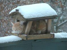 Cool Cat in Bird Feeder