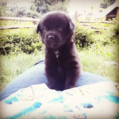 Real life Teddy Bear!  #irl #teddybear #teddy #fluffy #puppiesofinstagram #pupstagram #doggito #baby