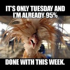 Lol Happy Tuesday everyone. Lol Happy Tuesday everyone. Emily's pins Yeppers! Lol Happy Tuesday everyone. Funny Shit, Haha Funny, Funny Jokes, Funny Chicken Memes, Lame Jokes, Hilarious Quotes, Funny Minion, Tuesday Quotes Funny, Wednesday Humor