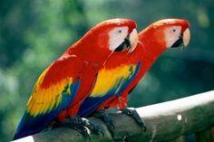 Plongez au cœur de l'authentique Costa Rica, dormez chez l'habitant, parcourez les routes du pays au volant de votre voiture de location pour un voyage hors des sentiers battus.