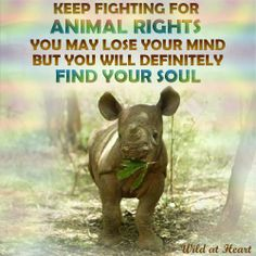 """""""Keep fighting for animal rIghts. You may lose your mind, but you definitely will find your soul."""" 