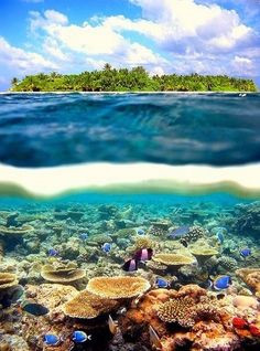 Paradise of Islands -   The Paradise of Islands-Maldives
