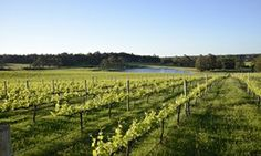 Margaret River, Australia. Western Australia. Wine valley. Wine tours. Xanadu Cabernet Sauvignon. Bushtucker River & Wine Tours.