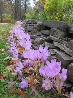Home Backyard Landscaping Planting Tools, Garden Tools, Bulb Planter Tool, Fall Perennials, Blossom Garden, Hair And Beard Styles, Garden Beds, Pretty Flowers, Backyard Landscaping